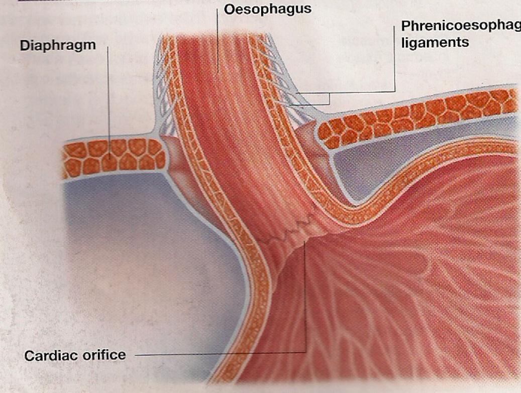 9mmm nodularity of l adrenal gland