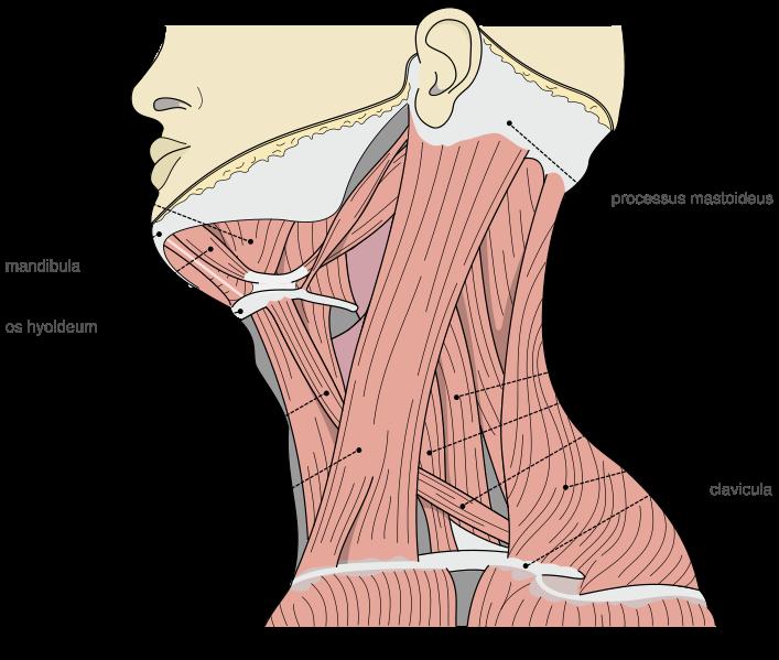 Stiff Neck (Torticollis or wryneck) exercises | Dr Ko Ko ...