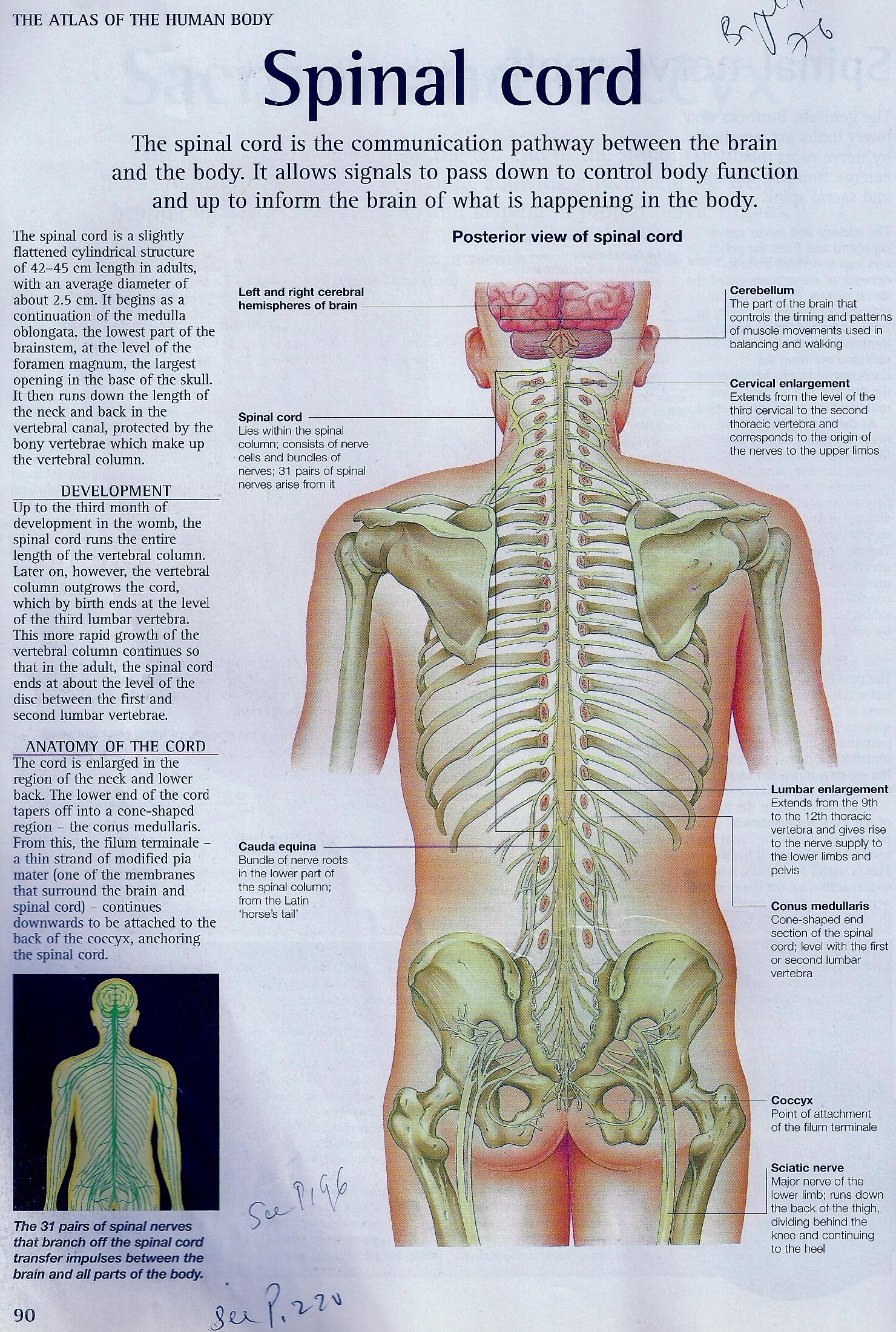 Sciatica exercises exercises for sciatic nerve